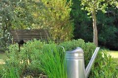Aromatiska örter i trädgård Royaltyfri Foto