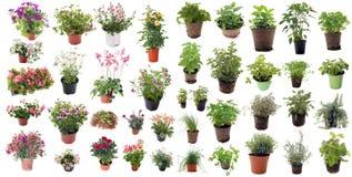 Aromatiska örter och blommaväxter Arkivbild