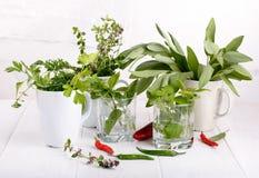 Aromatiska örter och kryddor från trädgården royaltyfri fotografi