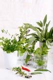 Aromatiska örter och kryddor från trädgården arkivfoton