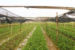 Aromatiska grönsaker Royaltyfri Fotografi