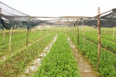 Aromatiska grönsaker Fotografering för Bildbyråer