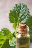 Aromatiska oljor av citronbalsam i en glasflaska royaltyfri bild