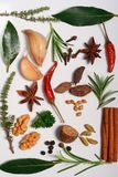 aromatiska örtar Fotografering för Bildbyråer