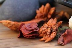 Aromatiska torra blommor Fotografering för Bildbyråer