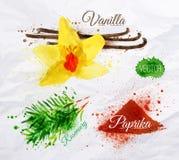 Aromatizza la vaniglia dell'acquerello delle erbe, il rosmarino, paprica Immagini Stock Libere da Diritti