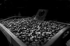 Aromatyczne kakaowe fasole jako tło Czarny i biały wizerunek obrazy royalty free