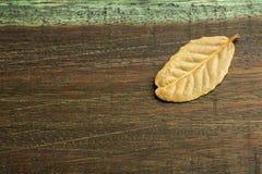 Aromatyczni bobków liście - Laurus nobilis Drewniany tło obrazy stock