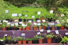 aromatyczni ziele Obraz Stock