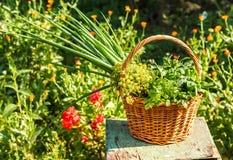 Aromatyczni ziele obrazy stock