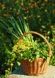 Aromatyczni ziele zdjęcia stock
