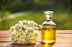 Aromatyczny istotny olej i biali kwiaty Zdroju pojęcie Kosmetyki i zdrój opieka fotografia royalty free