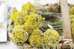 Aromatyczny lawendowy kolor żółty zdjęcia stock
