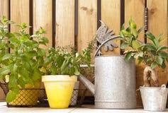 Aromatyczny ziele ogród i podlewanie puszka, drewniany tło zdjęcia royalty free