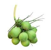 Aromatyczny zielony koks lub fragrant koks odizolowywający nad bielem fotografia stock