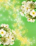 aromcamomile arkivfoton