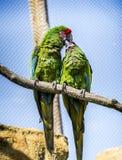 Aron papugi Obrazy Royalty Free