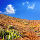 Arona Cactus mountain in Tenerife south Stock Images