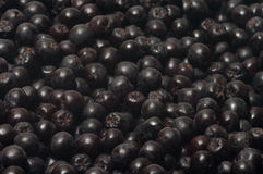 Aronia. Stock Photography