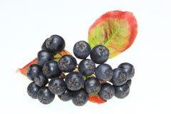 Aronia berries Royalty Free Stock Image