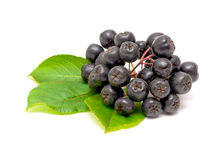 Aronia berries on a white background Stock Image