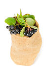 Aronia berry in the bag Royalty Free Stock Photography