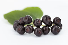 Aronia Royalty Free Stock Image