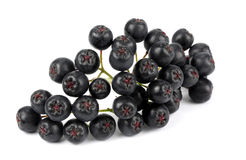 Aronia (chokeberry) Στοκ φωτογραφία με δικαίωμα ελεύθερης χρήσης