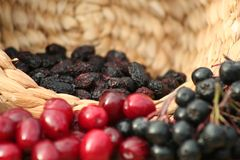 Aronia and cranberry Royalty Free Stock Photos