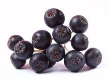 Aronia fruit on white background Stock Images