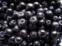 Aronia Fruits Stock Photography