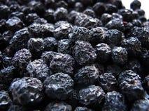 Aronia Fruits Royalty Free Stock Photo