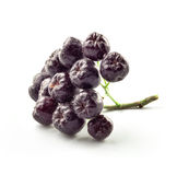 Aronia fruits Royalty Free Stock Photos
