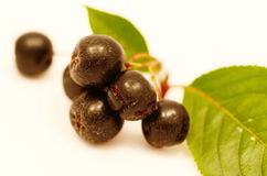 Aronia Royalty Free Stock Photo