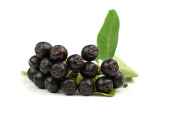 Aronia - Zwarte Chokeberry. Royalty-vrije Stock Afbeelding