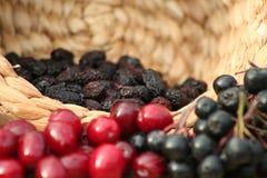 aroniacranberry Royaltyfria Foton