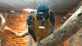 AROS bonitas grandes de um papagaio vídeos de arquivo