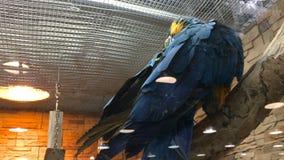 AROS bonitas grandes de um papagaio filme