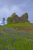 Aros Castle ruin. View of the ruin of Aros Castle, Isle of Mull, Scotland from the south sloping, blue-bell carpeted embankment. Photographed on a fresh spring Royalty Free Stock Photography