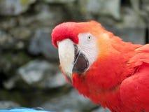 Aros vermelhas brilhantes Fotografia de Stock Royalty Free