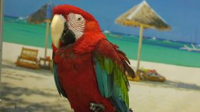 Aros vermelhas do papagaio vídeos de arquivo
