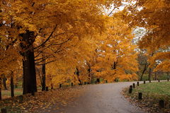 Around the Bend. This pleasing autumn scene was taken on the grounds of the Morton Arboretum in Lisle, Illinois. These were several Maple trees in full fall Stock Photos