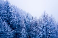Around christmas time: winter scene in the Swiss alpine mountain stock image