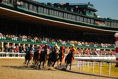 Around the first bend. A group of thoroughbreds speed around the first bend at Keeneland Race Track in Lexington, Kentucky Royalty Free Stock Photos