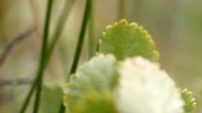 Among around macro  vegetation polar leaf summer stock footage