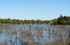 Around Maun in Botswana Royalty Free Stock Photo
