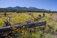 Around the Peaks Loop: FR 418 Stock Image