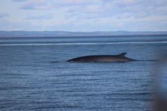 Discovery of Quebec landscapes with Whales Stock Image