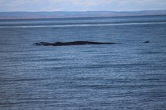 Discovery of Quebec landscapes with Whales Royalty Free Stock Images