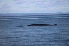 Discovery of Quebec landscapes with Whales Stock Photos